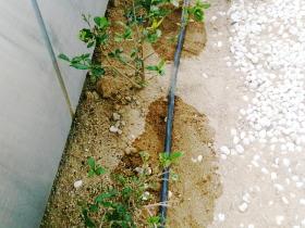花壇や庭木1本からご相談ください ご家庭の花壇・お庭の植栽など庭木一本からお任せ!