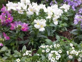 お好きなお花で花壇を 花壇のお好きな色やイメージなどをお話ししながら素敵な花壇づくりをサポート