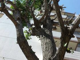 庭木1本から剪定OK お庭全体はもちろん、庭木1本からでもしっかりと剪定致します。